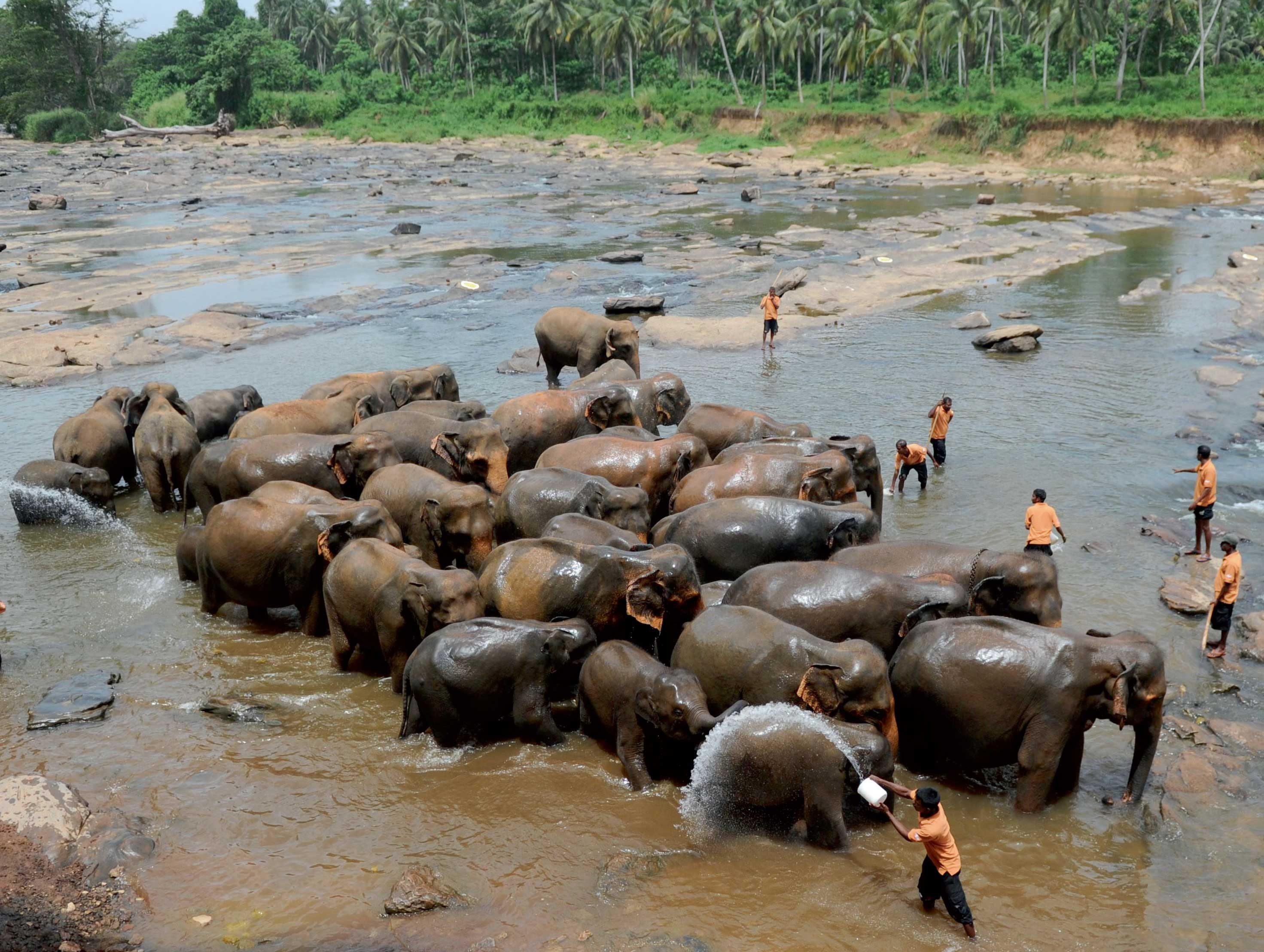 Go on, put Sri Lanka's elephant orphanage on your bucket list