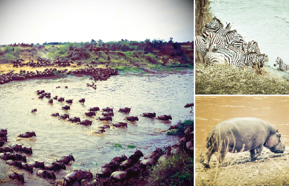 In a little bit of Kenya you can see a whole lot of migration