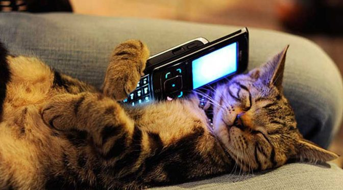 Hold all calls while I speak with my cat
