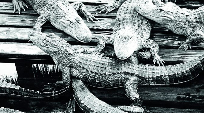 Pointless deaths of 300 crocs left me mad at people